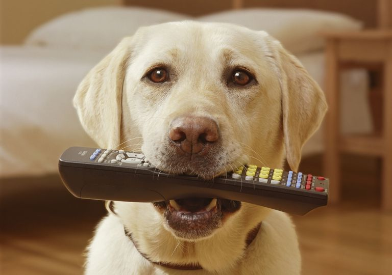 dog_with_remote.jpg