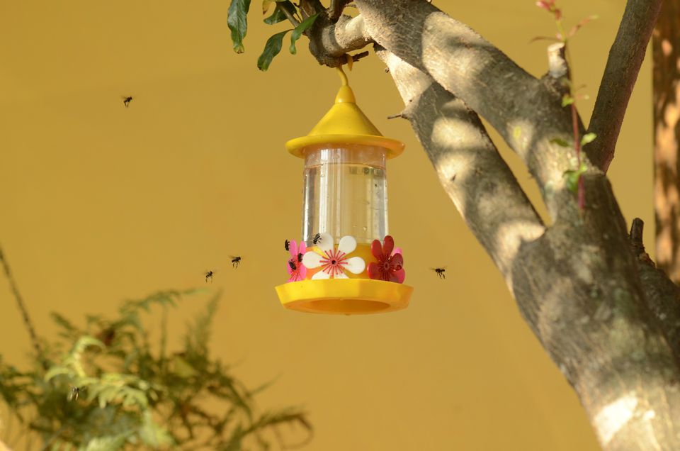 Hummingbird feeder insects
