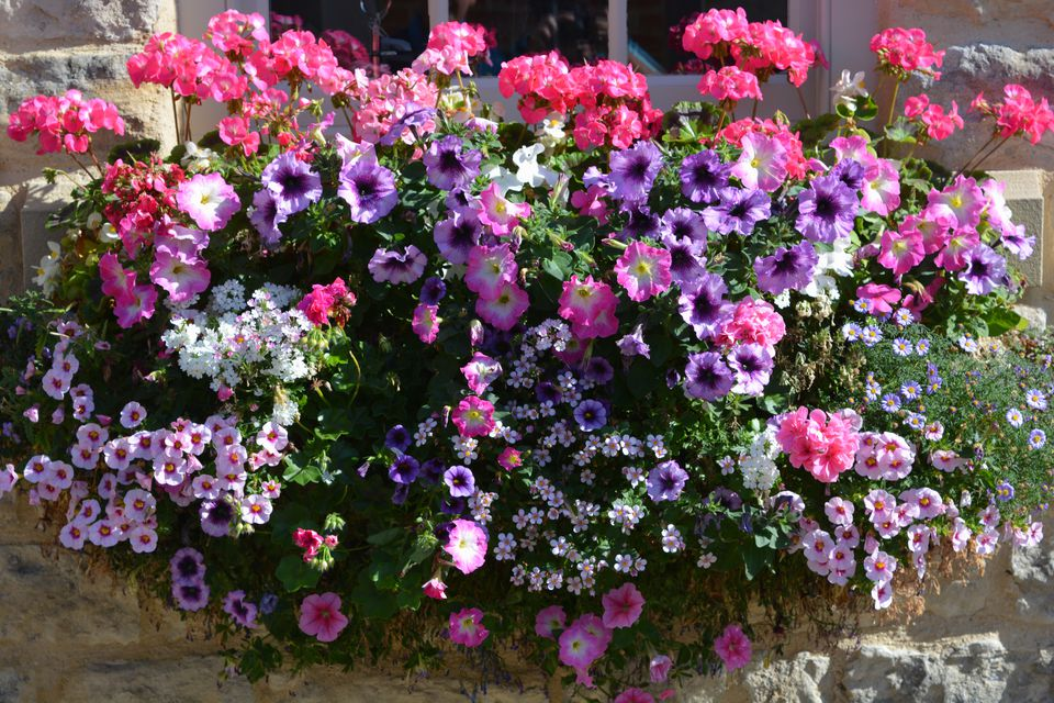 Pink and Purple Window Box