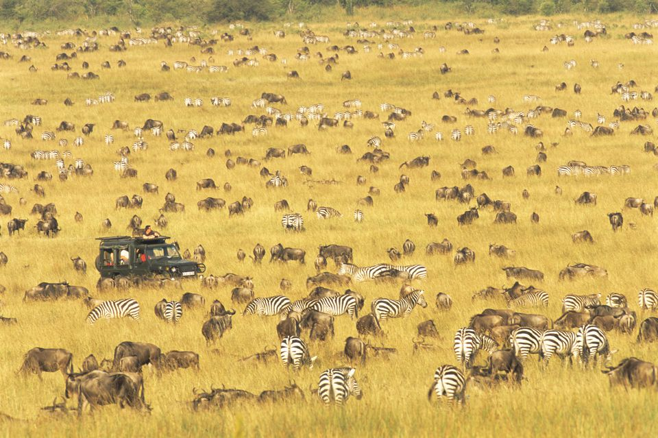 When is the Best Time of Year to Visit Kenya