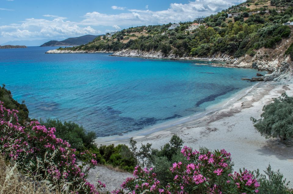 Elevated view of white sandy beach and turquoise water, framed by flowers, Petries, Greece