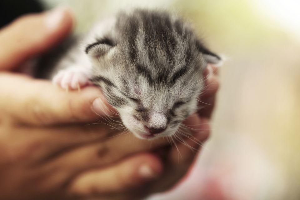 Man holding small kitten