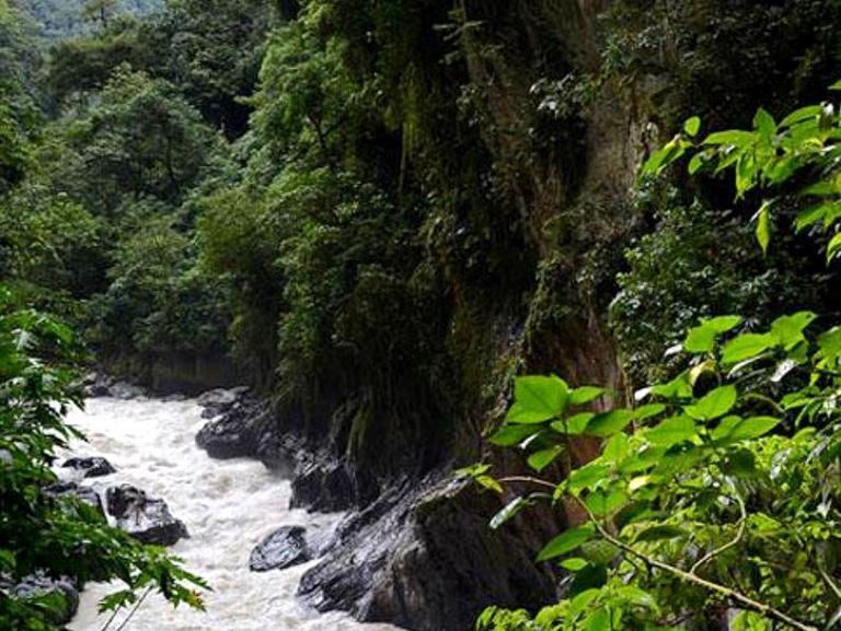 Parque-nacional-Yanachaga-Chemillen.jpg