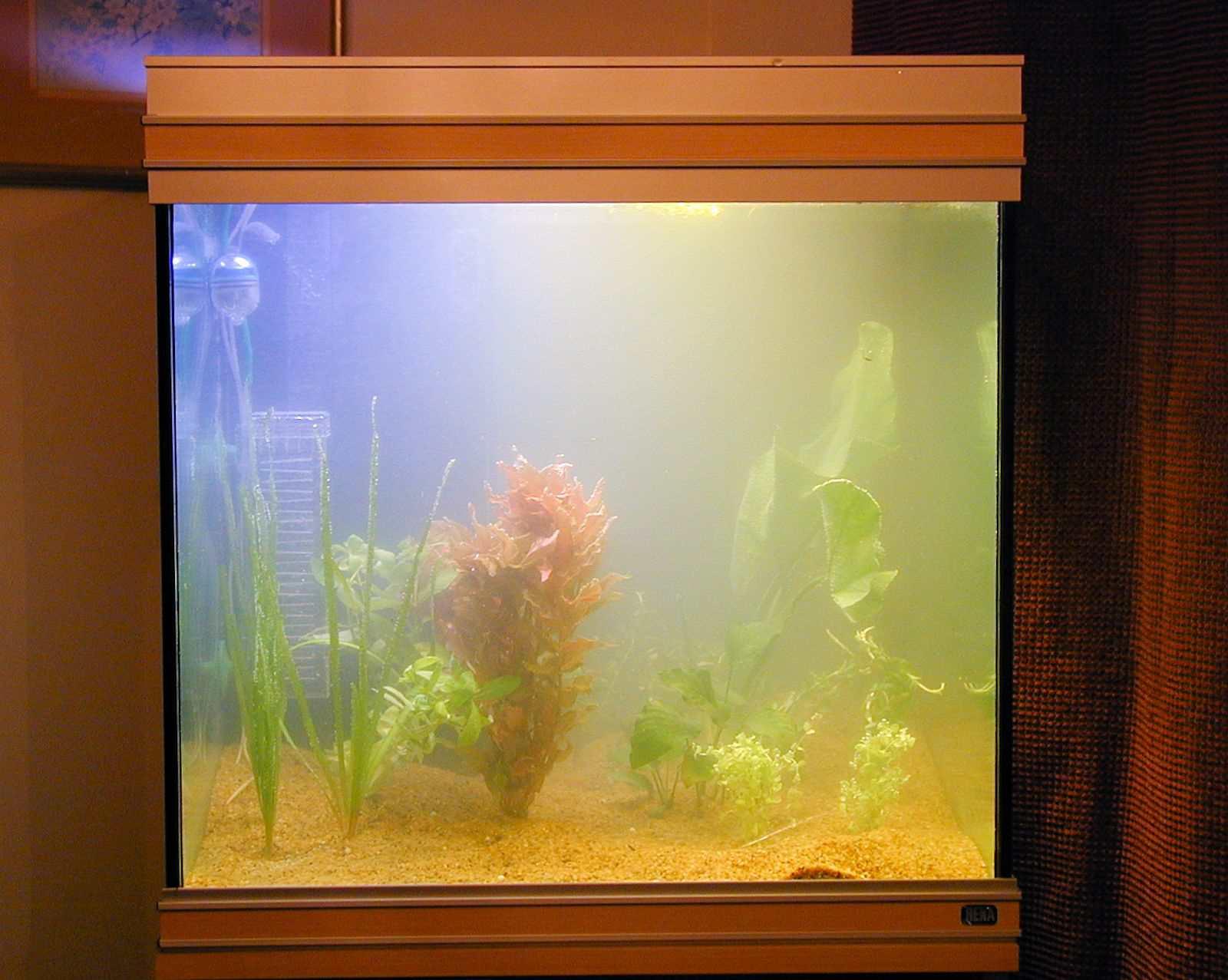 How to Balance Aquarium Water Basics