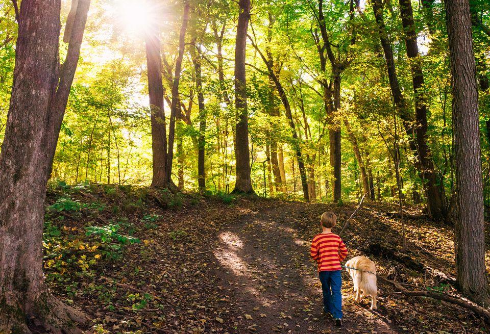 Boy walking dog in forest