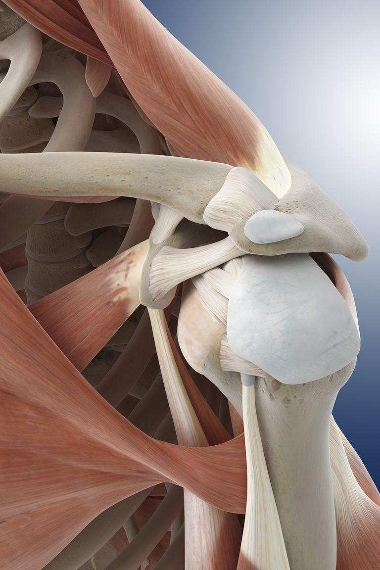 Ligaments hold the shoulder joint together.