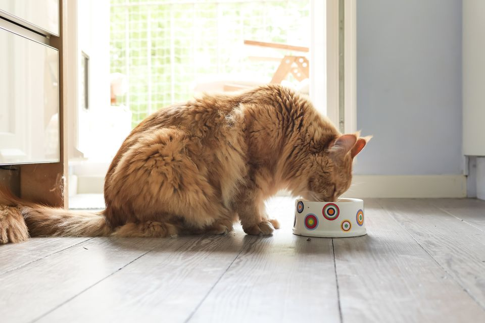Side View Of Cat Eating Food On Floor