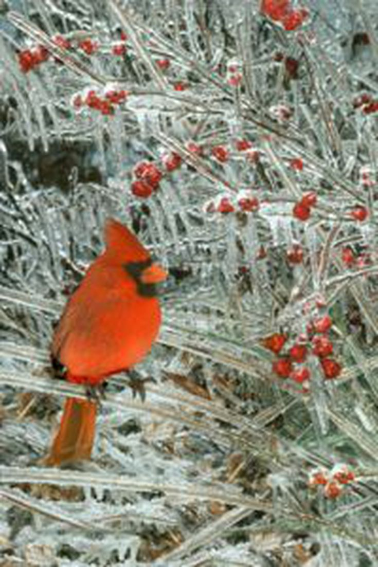 common winter birds in milwaukee identifying winter birds in