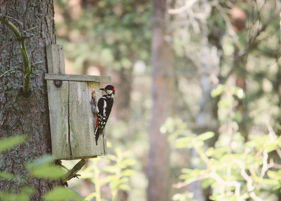 Woodpecker birdhouse