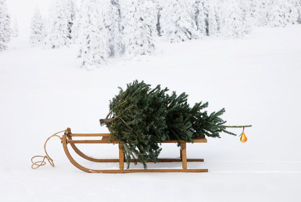 Christmas Tree Farms Near