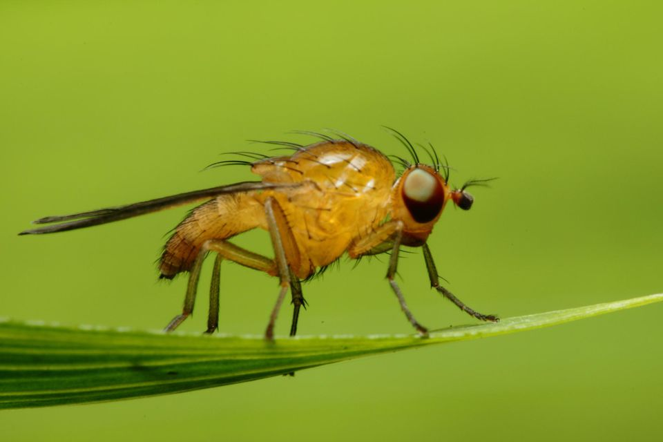 How To Deal With An Indoor Fruit Fly Infestation