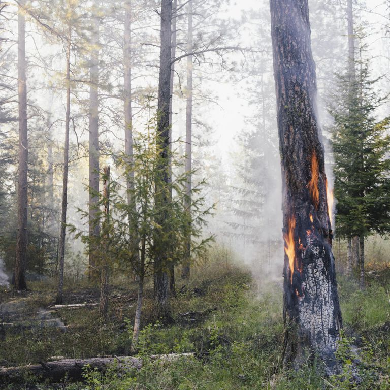 A controlled forest burn, a deliberate fire
