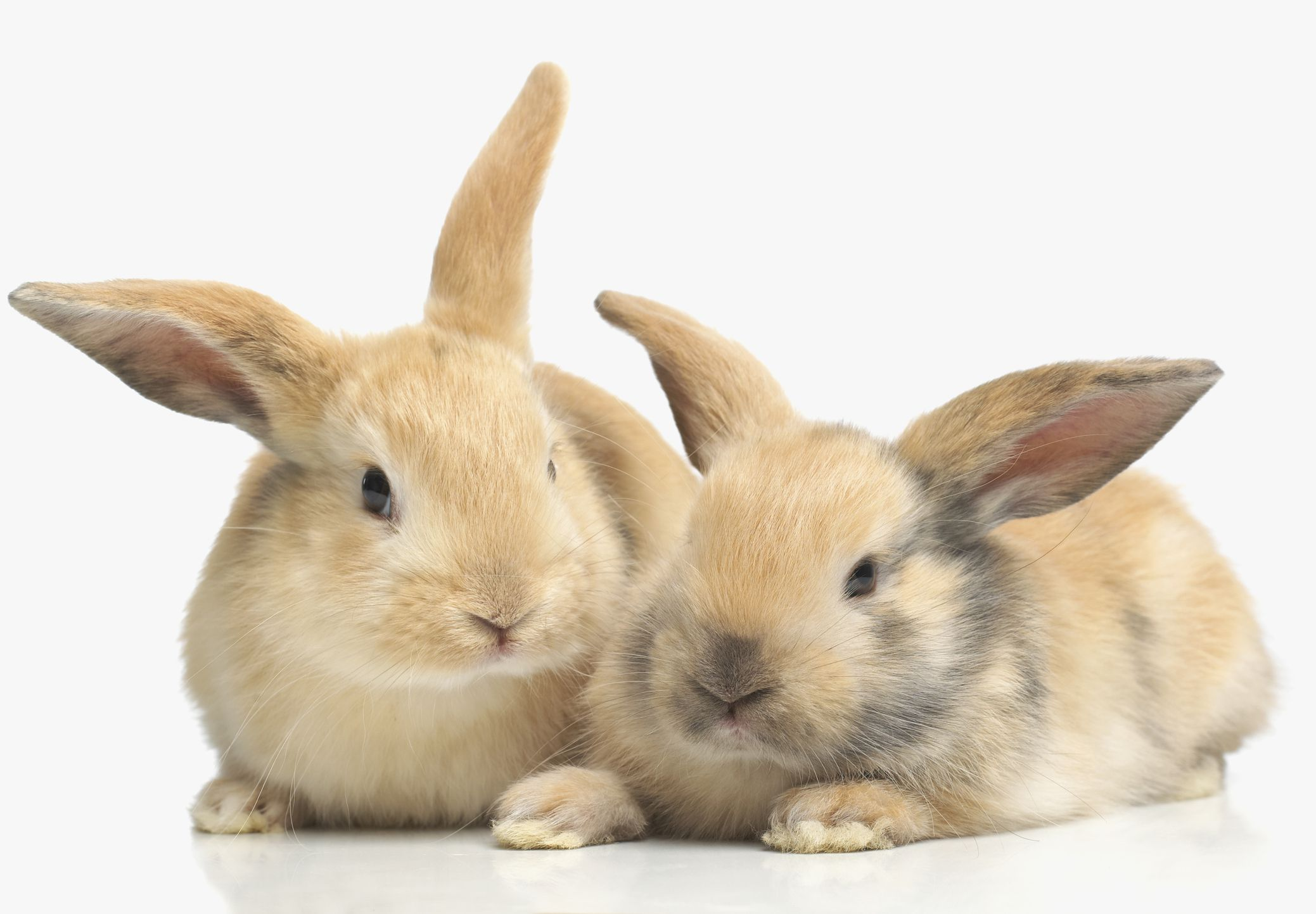 is a rabbit the right pet for you