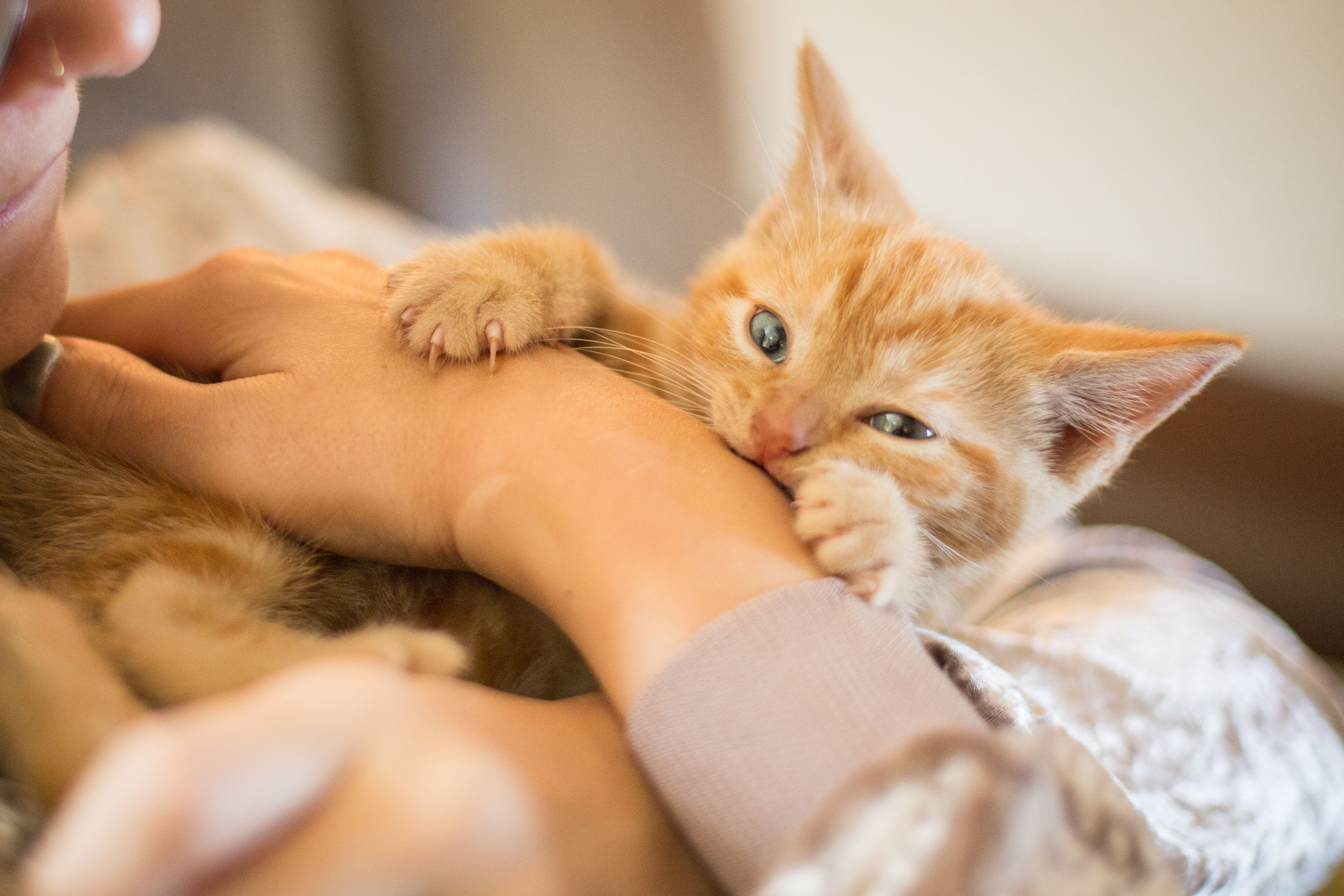 how to get a kitten to stop biting