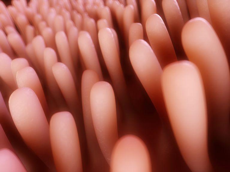 healthy intestinal villi