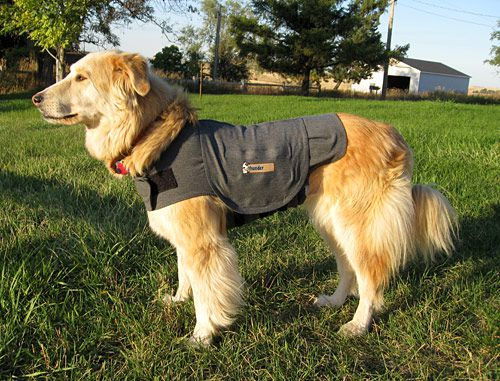 Sophie models the Thundershirt