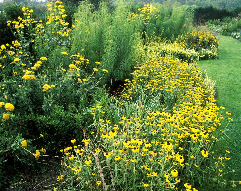 Yellow Herb Garden