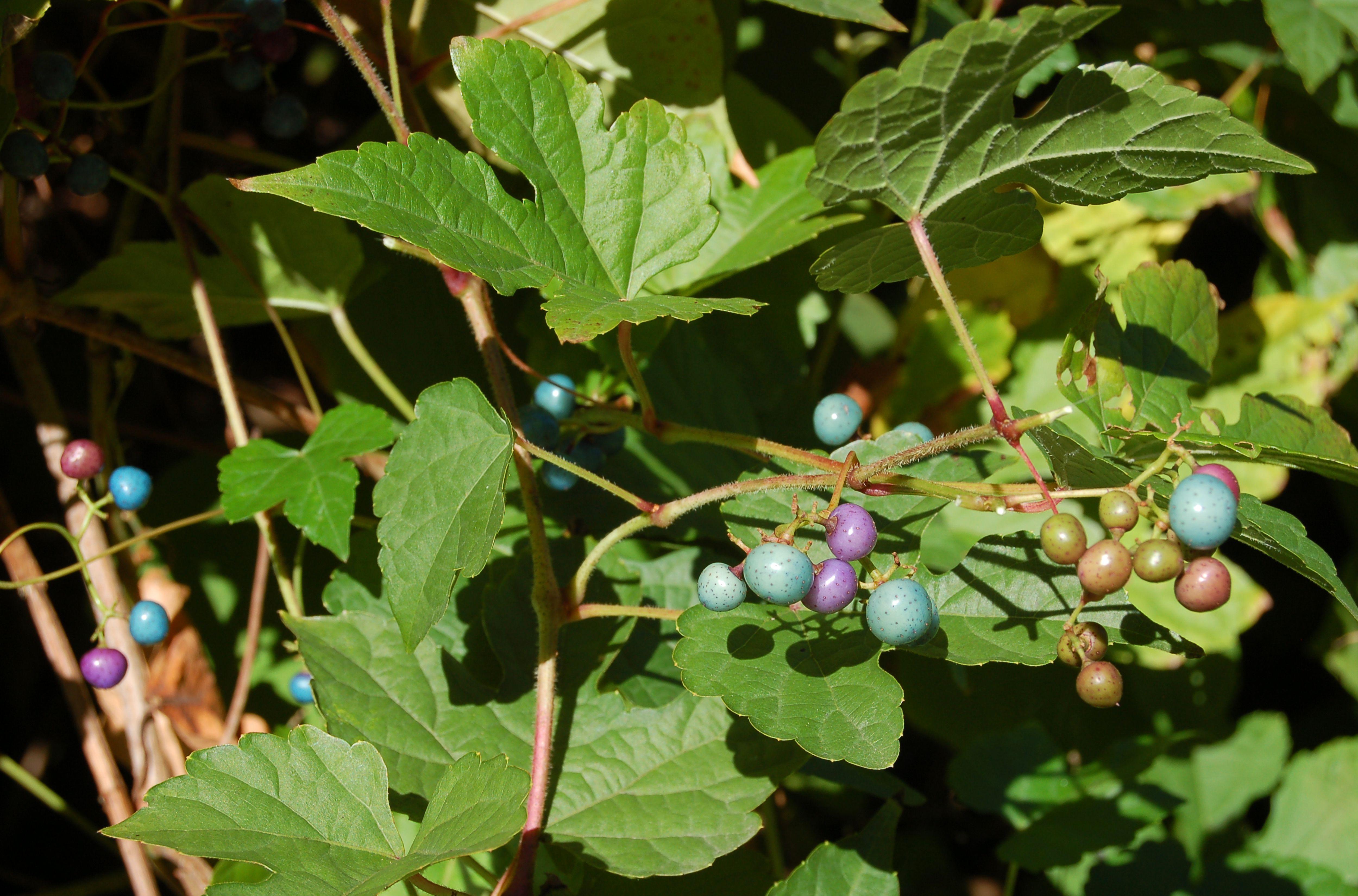 Woody Plants Botanical Term Amp Examples