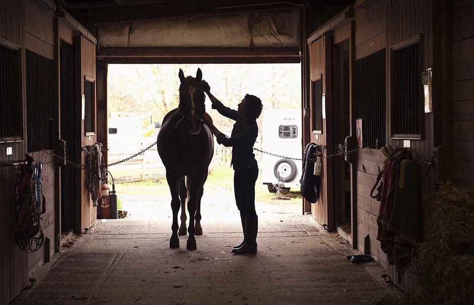 Horse in cross ties being brushed.