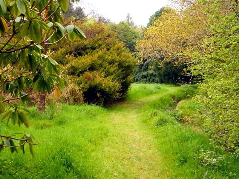 JFK Arboretum - Natural Path