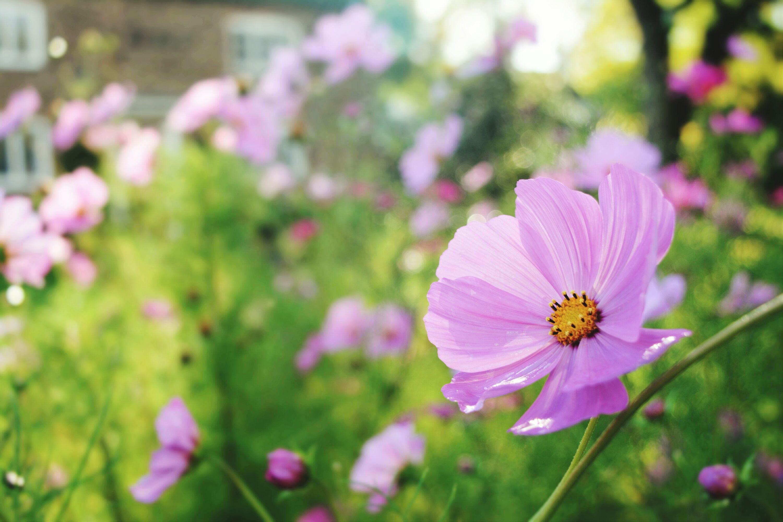 12 best annual flowers for full sun izmirmasajfo Choice Image