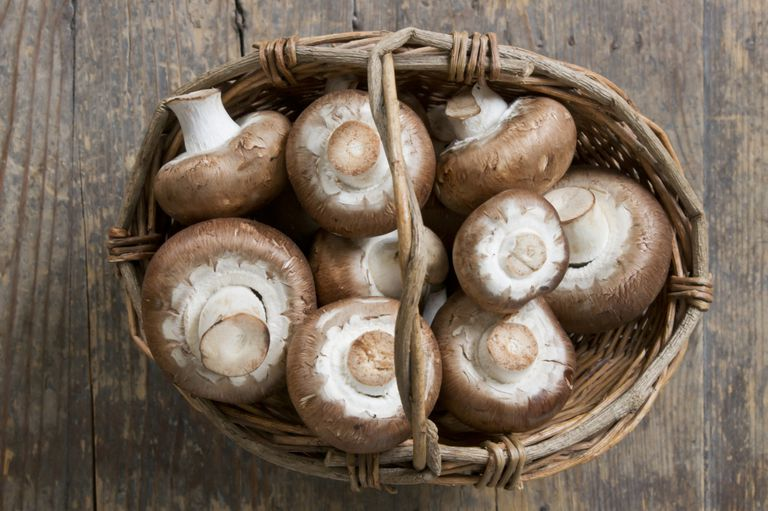 agaricus mushrooms