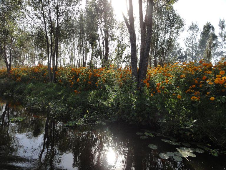 Chinampa Gardens at Xochimilco