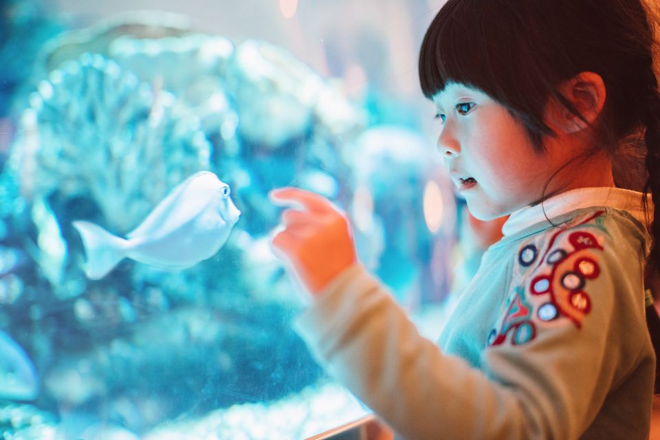 Lovely little girl admiring fishes in aquarium