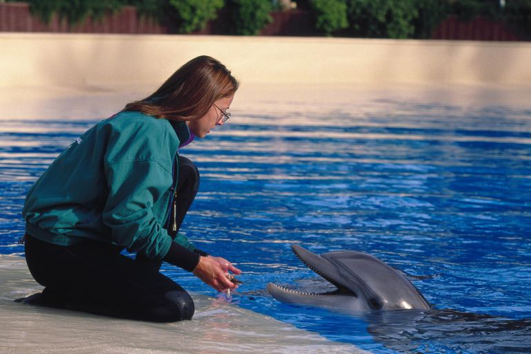 Dolphin with trainer
