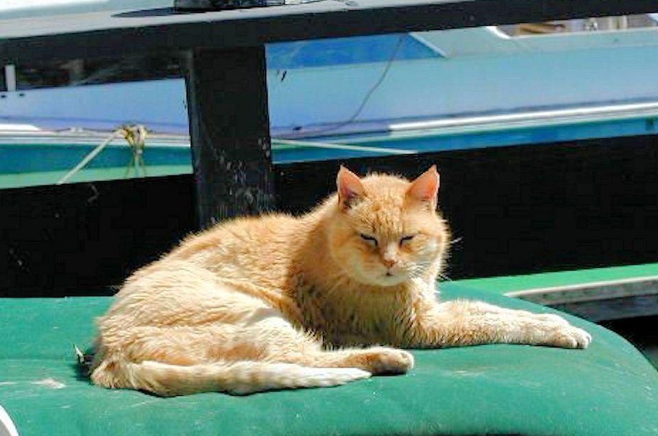 Senior Cat Shannon