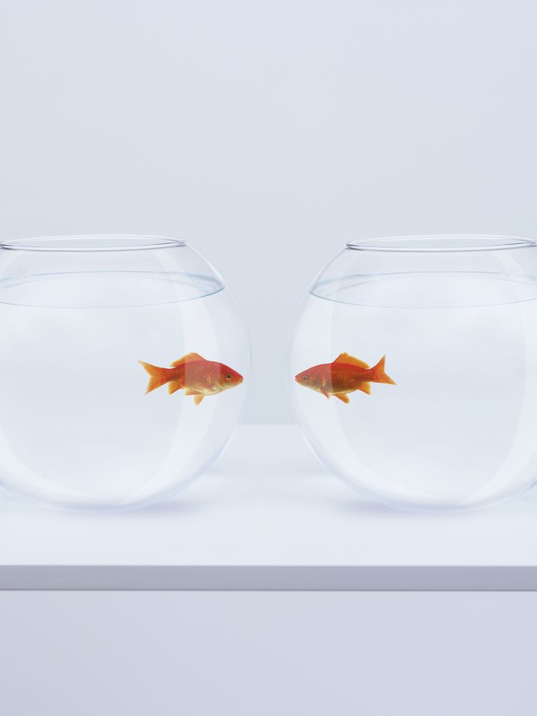 Two Fish, Face to Face