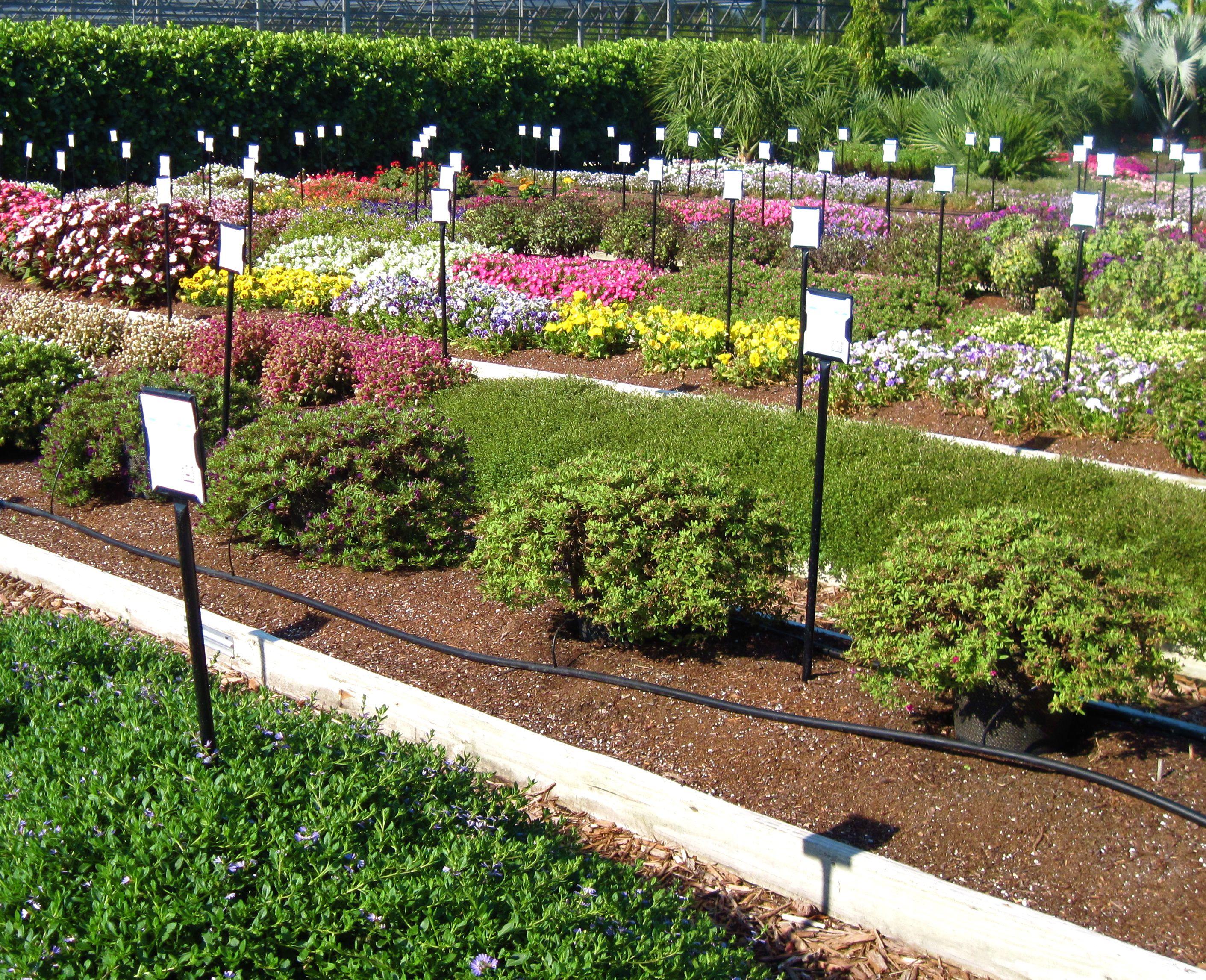Aprende c mo mejorar el terreno de tu patio o jard n - Como plantar cesped en el jardin ...