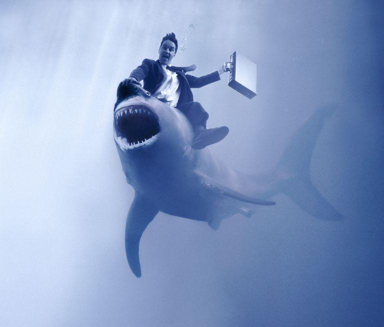 Businessman riding a shark