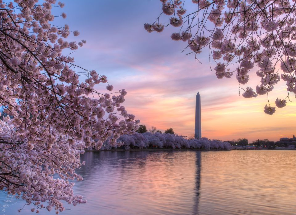 Best of the 2018 cherry blossom festival washington d c Cherry blossom pictures