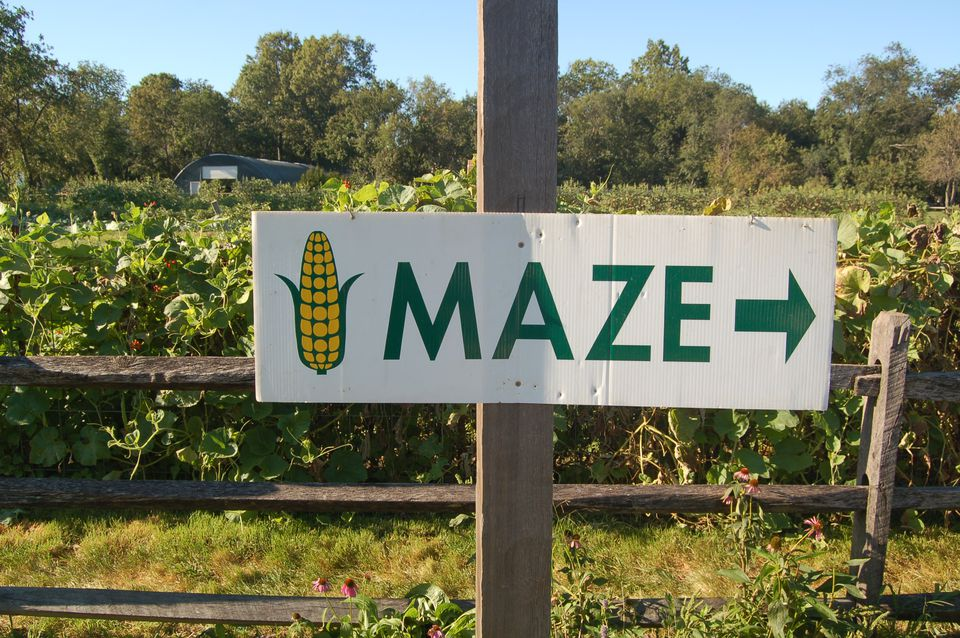 Halloween in Queens - Maize Maze