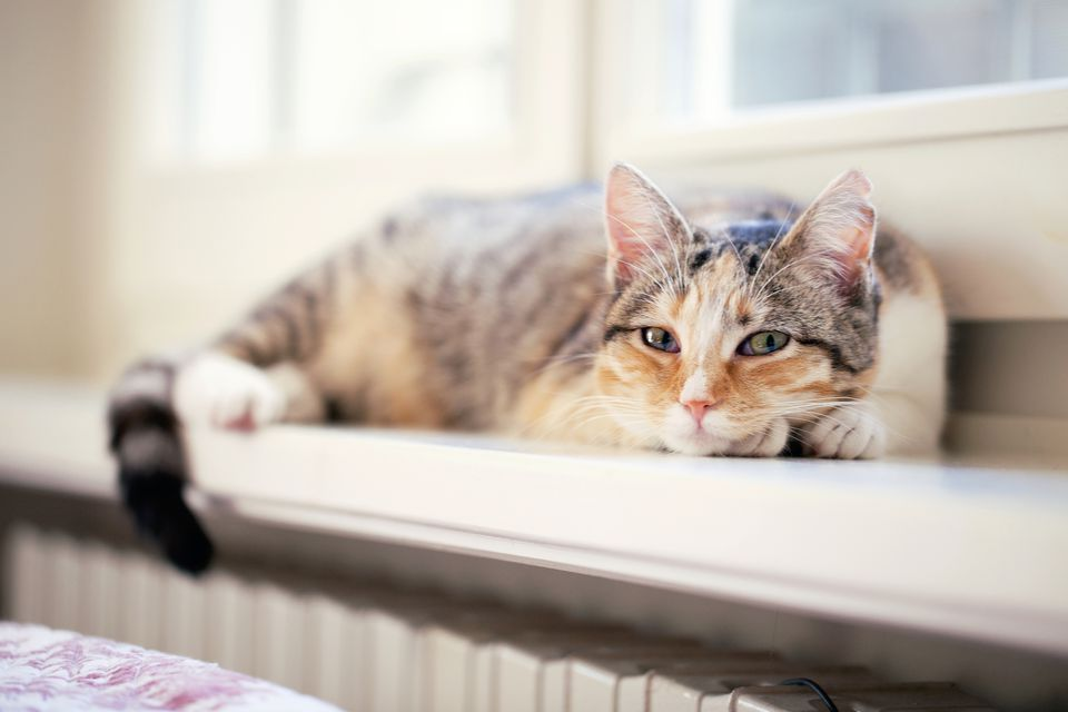 Cat resting by a window