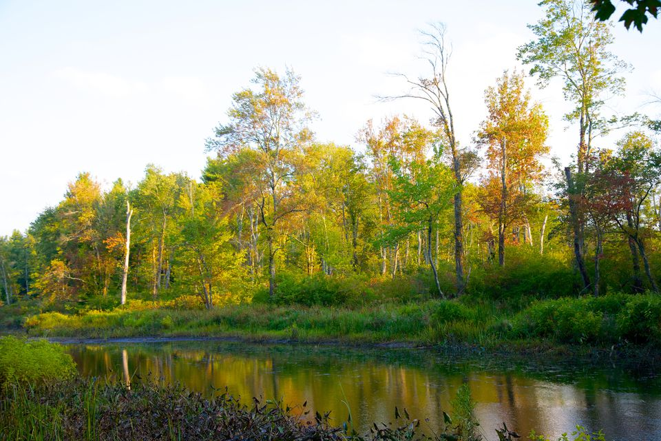 Fall Foliage at White Memorial Conservation Center