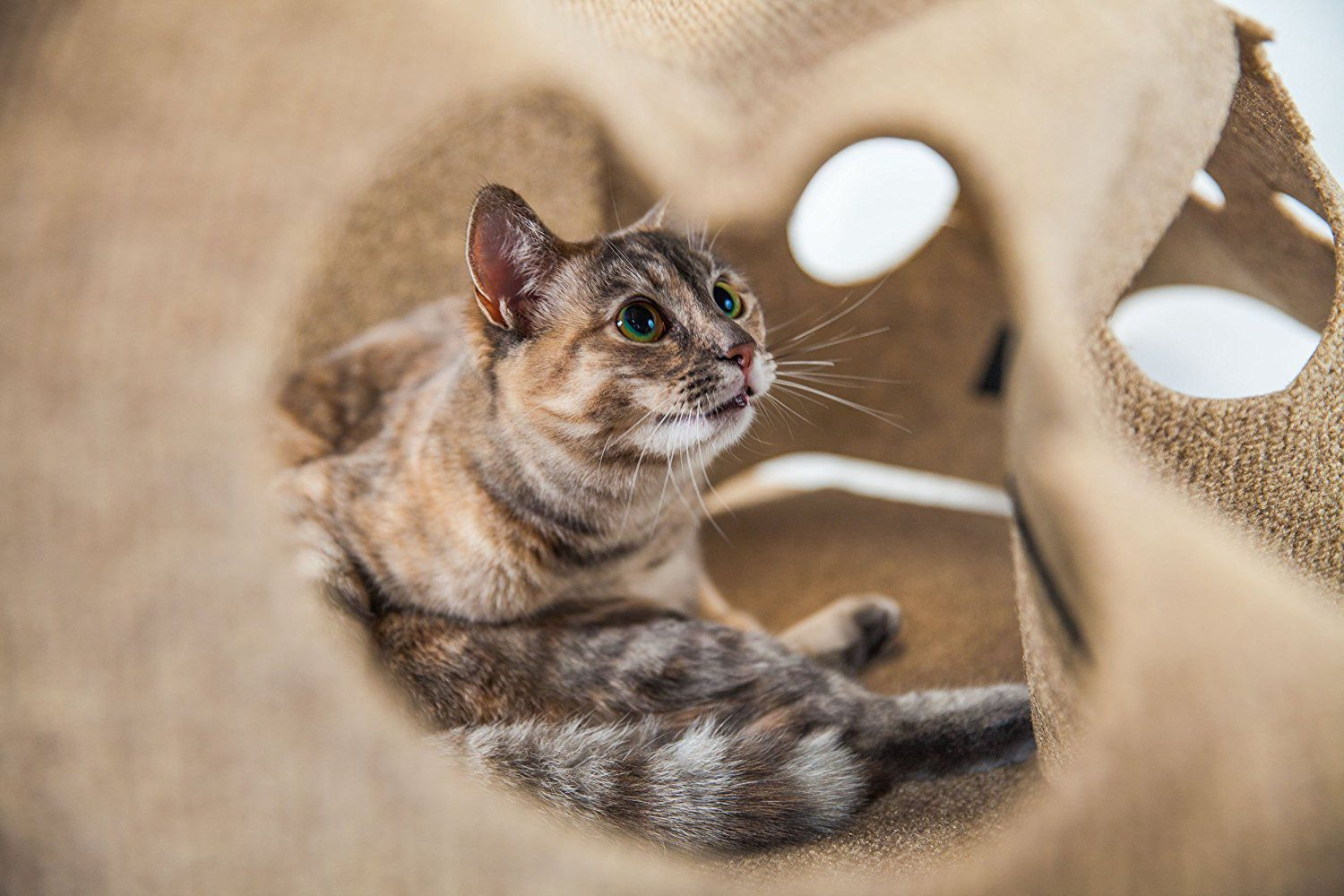 The Best Cat Toys To Buy In - Take look inside one amazing cat sanctuaries world
