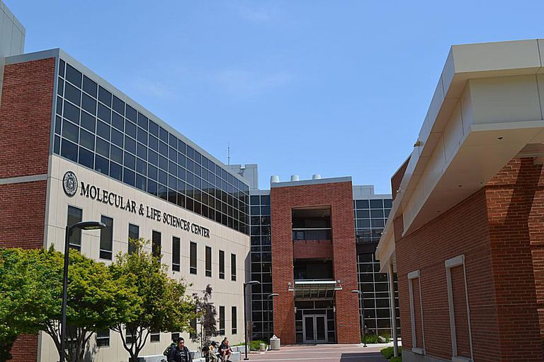 College Of Natural Sciences And Mathematics Csulb