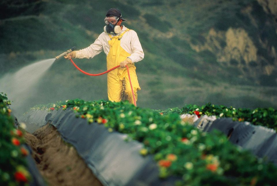 The Safety Profile Of Roundup