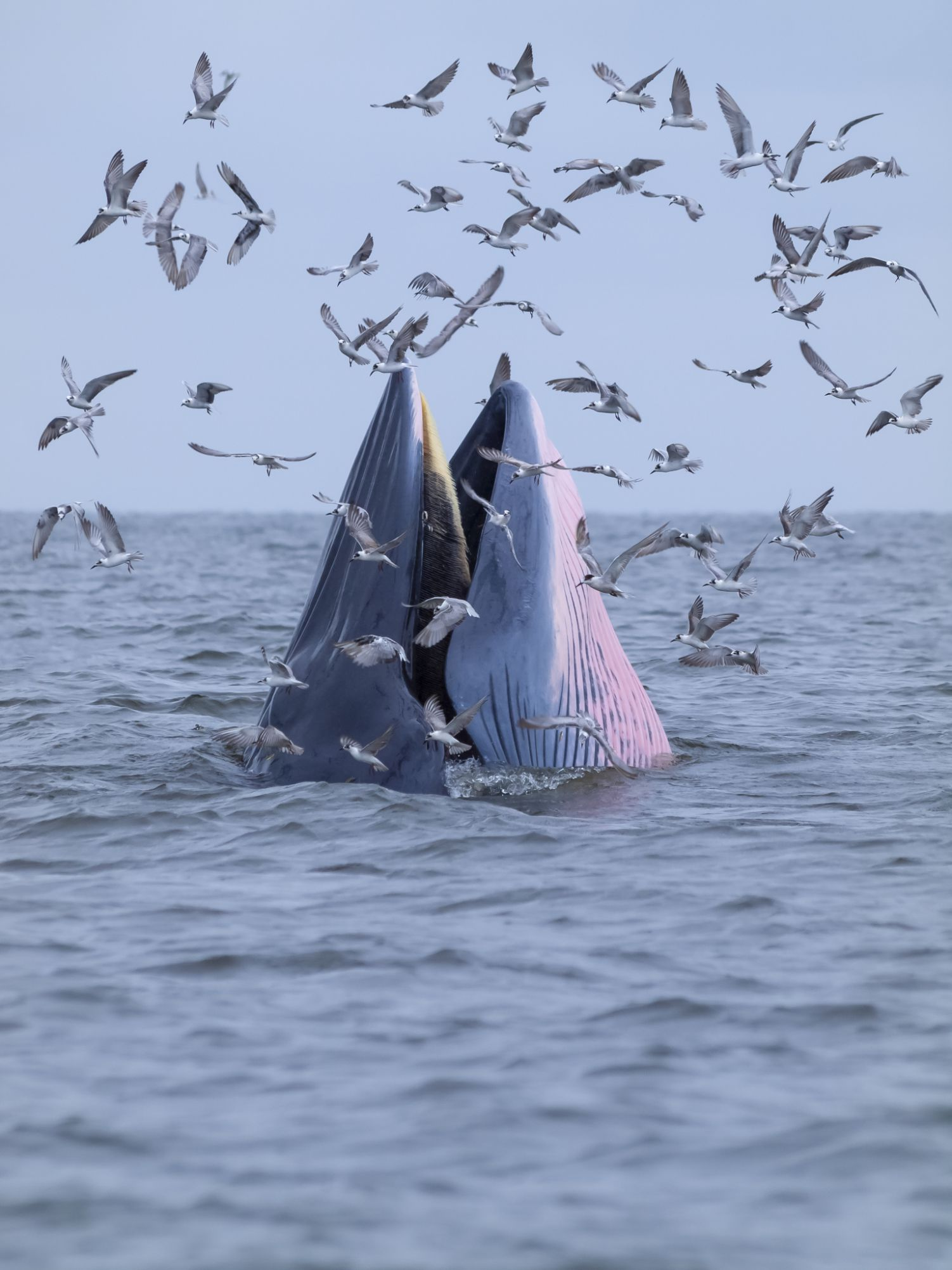 photos and descriptions of 19 different types of whales