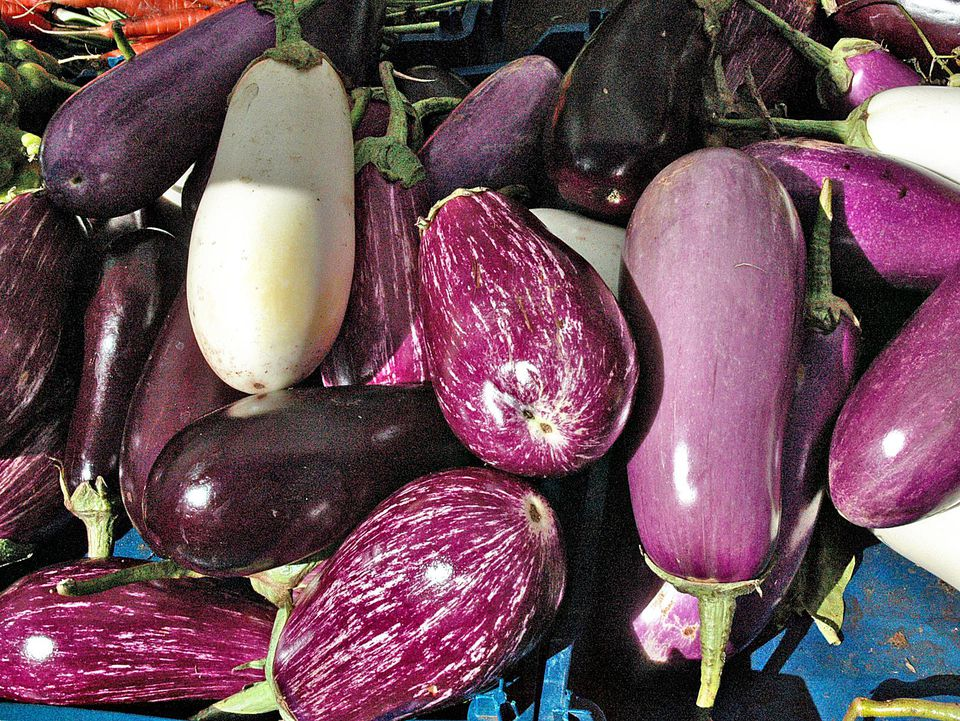 A Variety of Eggplants