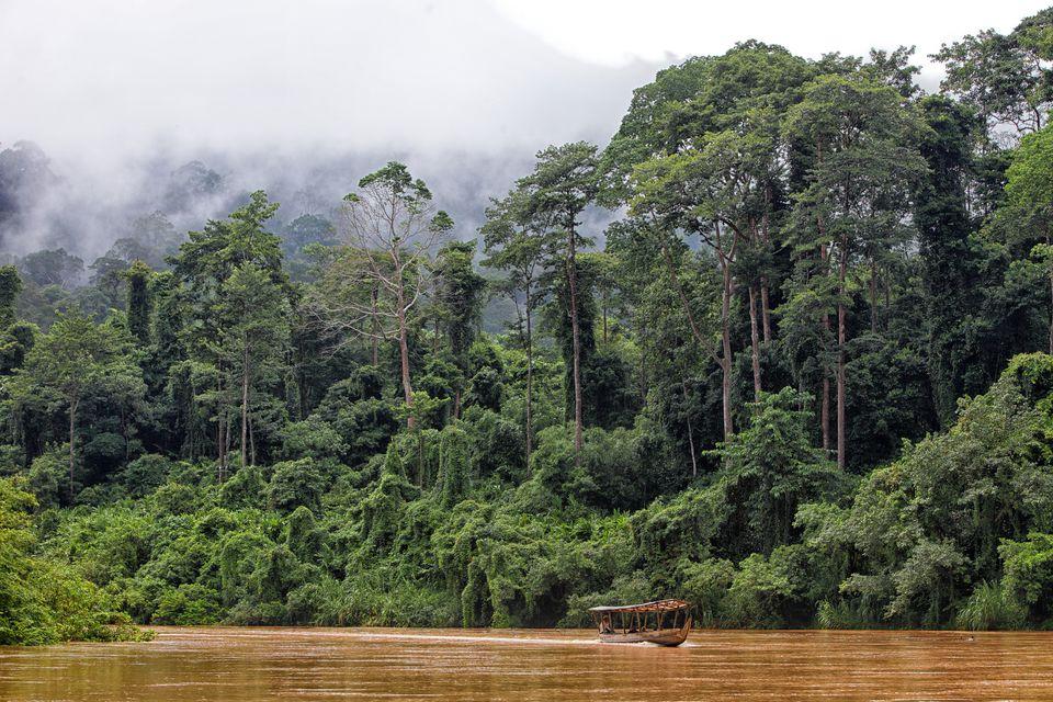 Malaysia, Pahang, Taman Negara National Park, jungle at Sungai Tembeling