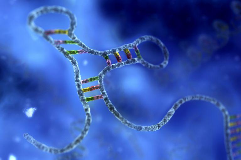 RNA Hairpin Loop