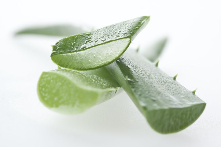 Aloe vera leaves.