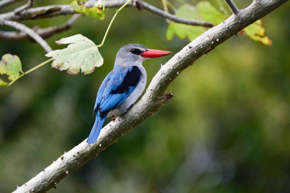 Five Tips for Beginner Birdwatchers on an African Safari