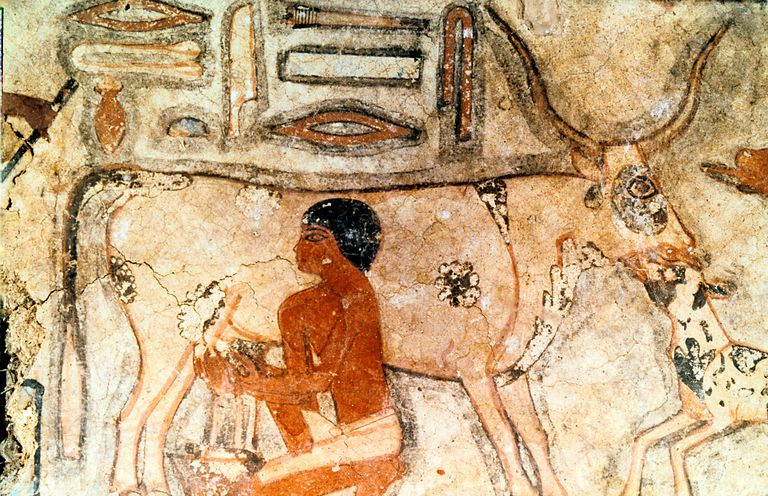 Milking a Cow, Tomb of Methethi, Saqqara, ca. 2731-2350 BC
