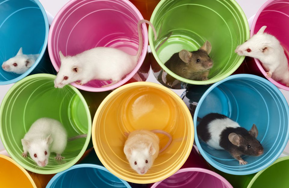 Mice Living In Colorful Mouse Apartments, Condos of Plastic Cups