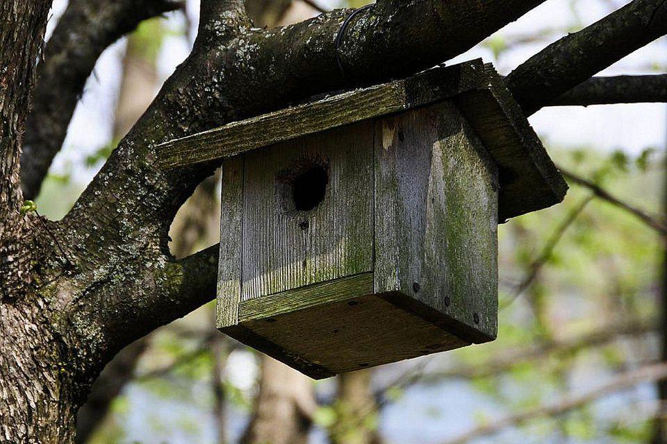 Simple Bird Houses - Learn the Basics