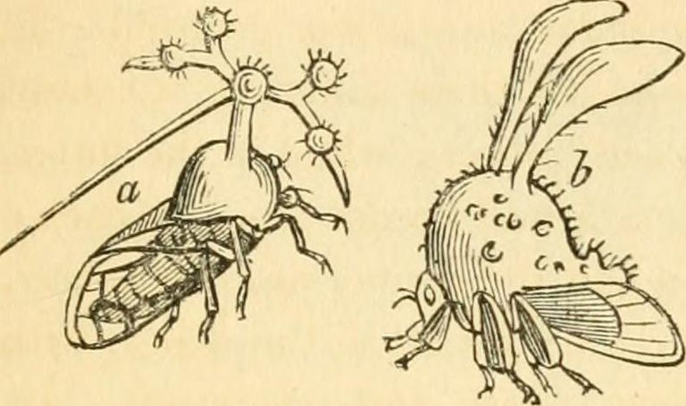 14595967848_d46c512250_o-Internet-Archive-Book-Images-Image-from-page-388-of-The-entomologist-s-text-book-an-introduction-to-the-natural-history-structure-physiology-and-classification-of-insects-including-the-Crustacea-and-Arachnida-1838-.jpg